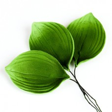 Orchid Leaves - Green