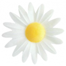 Daisies - Small - White