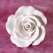Garden Roses - White