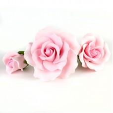 Garden Roses - Asst. sizes - Pink