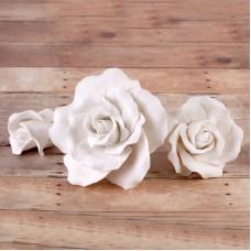 Garden Roses - Asst. sizes - White