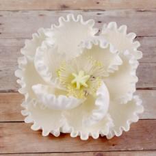 Peonies - Large - White