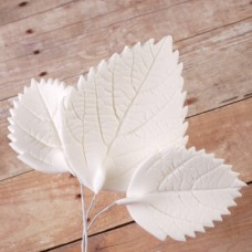 Hydrangea Leaves - Asst. - White