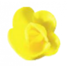Wafer Roses - Mini - Yellow