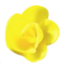Wafer Roses - Medium - Yellow